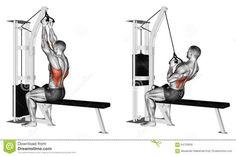 Exercising. Thrust Of The Upper Block Parallel Grip Stock Illustration - Image: 64729936