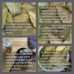 Healing properties of bay leaves Healing Herbs, Medicinal Herbs, Natural Healing, Healing Spells, Natural Herbs, Herbal Remedies, Health Remedies, Natural Remedies, Magic Herbs