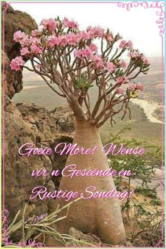 Good Morning Greetings, Good Morning Quotes, Afrikaanse Quotes, Goeie Nag, Goeie More, Out Of Africa, Bible Verses Quotes, Deep Thoughts, Positive Quotes