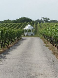 Pellegrini Vineyards - Cutchogue, NY, United States.  For more information about this winery and our extensive guide to the best USA wineries, winery weddings, as well as information about wine, visit: http://www.allaboutcuisines.com/wine #Wineries Long Island New York #Winery Weddings