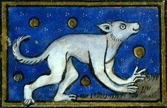 cefusa – a legendary beast which leaves human footprintsThomas of Cantimpré, Liber de natura rerum, France ca. 1290. Valenciennes, Bibliothèque municipale, ms. 320, fol. 56v