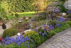 Rosen und Clematis - Clerotiker 2014 - Seite 28 - Rund um die Rose - Mein schöner Garten online