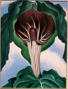 Georgia O Keeffe Jack In The Pulpit No