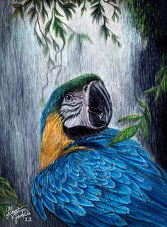 "9 x 12"" Blue and Gold Macaw Artwork - ""Under the Rain"". $50.00, via Etsy."
