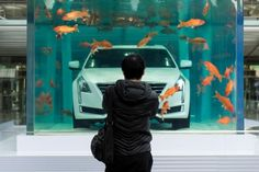 A man looks at a Cadillac CT6 displayed inside a fish tank during an event promoting the car's environmental-friendly features, in Shanghai, China, February 25, 2016. REUTERS/China Daily