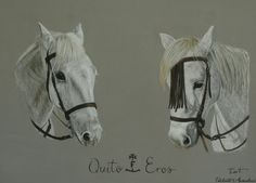 Eva F - Portraits animaliers #dessin #pastel #chevaux #portrait #printemps #camargue #camarguais #pencil #drawing