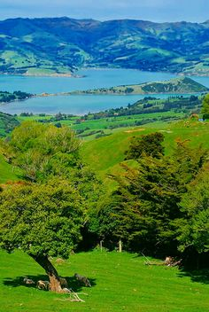 Akaroa's harbour, A French village, near Christchurch, New Zealand