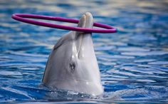 Victory! Japanese Aquariums Agree to Stop Taking Dolphins From Taiji