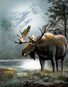 Alaska Moos With Floatplane Animal Art Painting - Alaska Moose With Floatplane by Regina Femrite Wildlife Paintings, Wildlife Art, Animal Paintings, Wild Life, Moose Pictures, Art Pictures, Animal Painter, Hunting Art, Moose Hunting