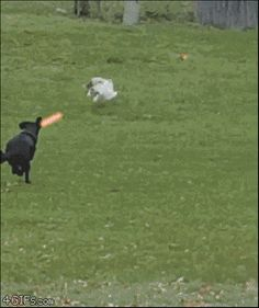 Star Wars: Episódio 8  Dog vs. Cat