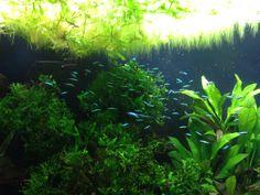 Inspiring aquarium