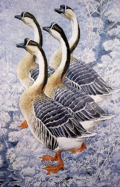 Charles Frederick Tunnicliffe (1901-1979). - African Geese, pencil/watercolour.