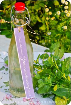 Zitronenmelisse Sirup The lemon balm is rampant again in my garden. This year it should be contained a bit, because it spreads explosively from year to year to all possible and impossible … Smoothie Drinks, Smoothie Recipes, Smoothies, Cocktail Recipes, Cocktails, Dinner Recipes, No Gluten Diet, Piping Tips, Lemon Balm