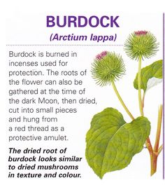 Magical flowers burdock
