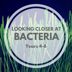 Download or subscribe to the free podcast Looking Closer at Bacteria by School Kit.