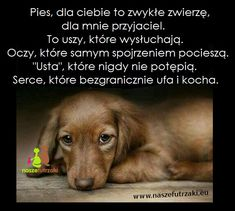 Najlepszy przyjaciel ❤️ Animals And Pets, Cute Animals, Daily Quotes, True Stories, Life Lessons, Wise Words, Psychology, Sad, Inspirational Quotes