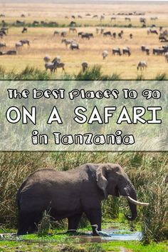 Safaris in Tanzania: Want to see the incredible wildlife of Africa? Learn about my trip to Africa & get recommendations for the best places to go on a safari in Tanzania, including Tarangire, Ngorongoro & the Serengeti Africa Destinations, Top Travel Destinations, Travel Tips, Zanzibar Beaches, African Holidays, Animal Experiences, Tanzania Safari, Wildlife Safari, Alaska Travel