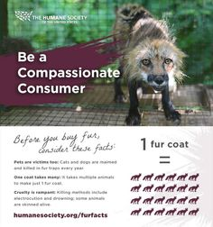 Consider these fur facts when you shop this season. Share and be a compassionate #furfree consumer!