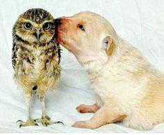 Lol owl looks confused :-)