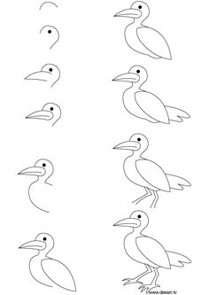 Drawing Seagull Learn How To Draw A With Simple Step By Instructions