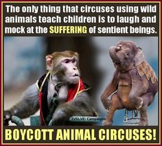 Animal Welfare is just as important as Human Rights. Boycott Animal Circuses.