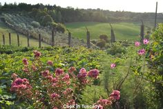 Love this flower farm.  www.cookintuscany.com    #tuscany #montefollonico #cookintuscany #Italy #cooking #school #culinary #montepulciano #class #schools #classes #cookery #cucina #travel #tour #trip #vacation #pienza #florence #cook #tuscan #cortona #allinclusive #underthetuscansun