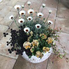 Container Plants, Container Gardening, Garden Nook, Plantation, Green Flowers, Flower Pots, Outdoor Gardens, Planting Flowers, Flower Arrangements