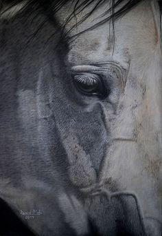 Horse III - Pastel Pencils Drawing on Behance
