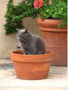Кошка и цветы