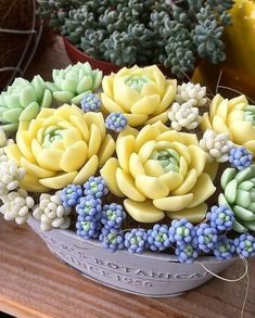 How Should Succulent Plants Be Raised? - Lily Fashion Style- How Should Succulent Plants Be Raised? – Lily Fashion Style How Should More Meat Be Raised? Colorful Succulents, Cacti And Succulents, Planting Succulents, Cactus Plants, Planting Flowers, Air Plants, Hardy Plants, Potted Plants, Propagating Succulents