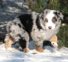 Super Cute Puppies, Baby Animals Super Cute, Cute Baby Dogs, Pretty Animals, Cute Little Puppies, Cute Cats And Dogs, Cute Dogs And Puppies, Cute Little Animals, Cute Funny Animals