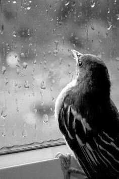 Black & White Photography - Bird on a rainy day Sound Of Rain, Singing In The Rain, Black White Photos, Black And White Photography, Photography Contests, Art Photography, Sweets Photography, I Love Rain, Rain Go Away