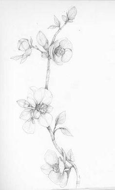 print of original illustration - drawing, crab apple Apple Blossom Tattoos, Apple Tattoo, Realistic Flower Drawing, Floral Drawing, Black Tattoos, Body Art Tattoos, Tatoos, Drawing Apple, Apple Flowers
