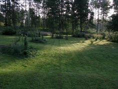 Solbacka summer morning