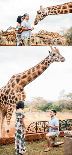 They travelled to Kenya to stay at Giraffe Manor, where he asked her to marry him with the help of a giraffe. It was the perfect proposal for an animal lover!