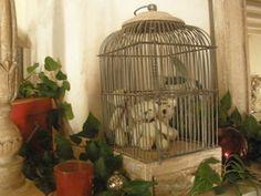 bears in a birdcage?  - lili boheme