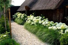 Beautiful ideas for landscaping with ornamental grasses used as an informal grass hedge, mass planted in the garden, or mixed with other shrubs and plants. Hydrangea Landscaping, Backyard Fences, Modern Landscaping, Front Yard Landscaping, Landscaping Ideas, Landscaping Around House, Back Gardens, Outdoor Gardens, Tree Lined Driveway