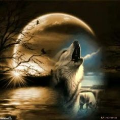Beautiful howling wolf n moon pic :-) Are you calling my name? Wolf Images, Wolf Photos, Wolf Pictures, Beautiful Wolves, Animals Beautiful, Fantasy Wolf, Fantasy Art, Tier Wolf, Wolf Artwork