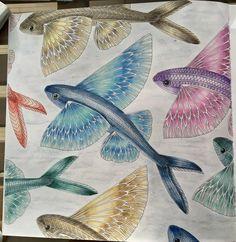 Curious Creatures Adult Coloring Colouring Books Color Inspiration Book Chance Tatuajes Paint Cowls In
