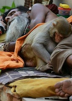 Photo by SIRISH BC in National Geographic A Hindu Sadhu (ascetic monk) taking a nap with his pet monkey in Varanasi, India Religions Du Monde, Cultures Du Monde, We Are The World, People Around The World, Amor Animal, Foto Poster, Amazing India, Pet Monkey, Shot Photo