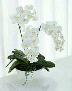 White Orchids Faux-Floral Arrangement by Natural Decorations Inc at Horchow. Arrangements Ikebana, Orchid Flower Arrangements, Orchid Centerpieces, Artificial Floral Arrangements, Artificial Silk Flowers, Phalaenopsis Orchid, Orchid Plants, Orchid Drawing, White Orchids