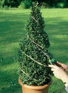 How to trim decorative shrubs by giving them special shapes – Practical ideas Topiary Plants, Topiary Garden, Topiary Trees, Topiary Decor, Boxwood Landscaping, Boxwood Garden, Front Yard Landscaping, Garden Deco, Garden Art