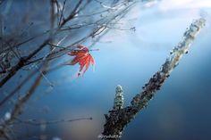 "87 Likes, 3 Comments - 異邦の騎士 (Oruba Shahid) on Instagram: ""雪凍ってるかな〜😰 #紅葉 #桜山公園 #群馬県 #canon #5dmark4 #135mmf2 #dreamyphoto #ドリーミーフォト #tokyocameraclub…"""