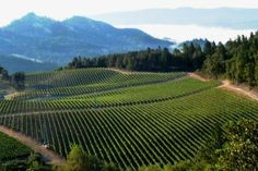 Vineyards owned by Peter Michael Winery in Knights Valley, tucked into the northeast corner of Sonoma County.