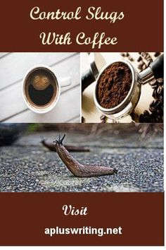 Control Slugs With Coffee How to get rid of slugs and snails with coffee. What kills slugs and snails. Do coffee grounds in garden soil kill slugs or perhaps get a recipe for how to make caffeine spray for slugs.