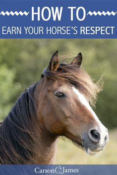 """Here's one of the best horse training tips you can use to earn more respect and trust from your horse. Many horses don't see their owners as the """"alpha"""" of the herd. Does yours?"""