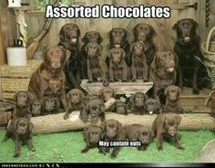 Assorted Chocolates ♥♥♥