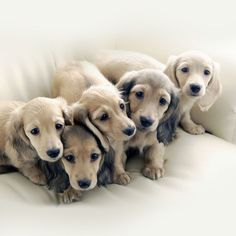 Little puppy family - Yummypets.com #pup #dog #puppy #family #cute