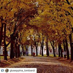 #wheretoserbia #Travel #Holidays #Trip #Traveling #Travelgram #TopLikeTags #Travelling #Travelingram #Traveler #Travels  #Instatravel #Instatraveling #Travelph #Travelpic #Travelblogger #Traveller #Traveltheworld #Travelblog #Travelbug #Travelpics #Travelphoto #Traveladdict #Travelstoke #TravelLife #autumn #amateurs_shot #Serbia