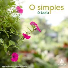 #frases #quotes O simples é belo. Simple is beautiful